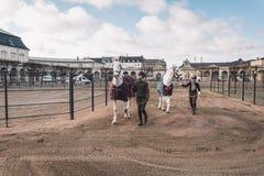 20 febbraio 2019 denmark copenhaghen Adattamento di formazione di esclusione di un cavallo nella stalla reale del castello Christ fotografie stock