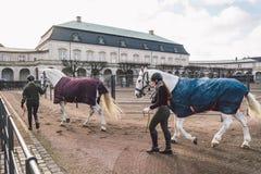 20 febbraio 2019 denmark copenhaghen Adattamento di formazione di esclusione di un cavallo nella stalla reale del castello Christ immagini stock libere da diritti