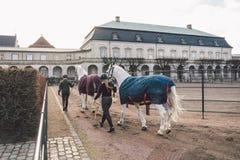 20 febbraio 2019 denmark copenhaghen Adattamento di formazione di esclusione di un cavallo nella stalla reale del castello Christ immagine stock libera da diritti
