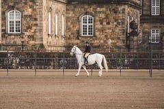 20 febbraio 2019 denmark copenhaghen Adattamento di formazione di esclusione di un cavallo nella stalla reale del castello Christ fotografia stock libera da diritti