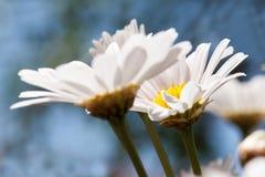 Febbre della primavera Fotografie Stock