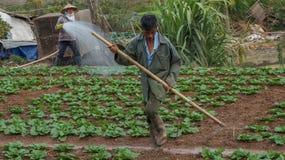 18, febrero 2017 - el granjero toma cuidado de la granja de la col de China en Dalat- Lamdong, Vietnam Imagen de archivo