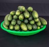 22, febrero El pepino 2017 de Dalat- da fruto en la cesta plástica verde, fondo negro Imagen de archivo