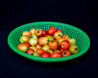 22, febrero El tomate 2017 de Dalat- da fruto en la cesta plástica verde, fondo negro Imagenes de archivo