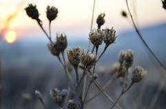 Febrero frío Foto de archivo libre de regalías
