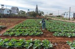 10, febrero Los granjeros 2017 de Dalat- Dalat plantan las coles en DonDuong- Lamdong, Vietnam Fotografía de archivo libre de regalías