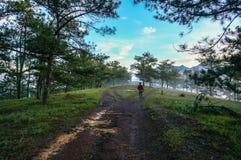18, febrero Niebla 2017 de Dalat- sobre el pino Forest On Sunrise Background y la nube beautyful en Dalat- Lamdong, Vietnam imagen de archivo