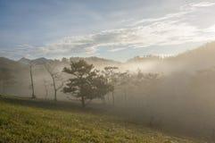 18, febrero Niebla 2017 de Dalat- sobre el pino Forest On Sunrise Background y la nube beautyful en Dalat- Lamdong, Vietnam Foto de archivo
