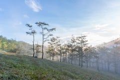 18, febrero 2017 - rayos en el bosque Dalat- Lamdong, Vietnam del pino Foto de archivo