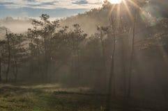 18, febrero 2017 - rayos en el bosque Dalat- Lamdong, Vietnam del pino Imagen de archivo libre de regalías