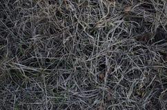 Februar gefrorenes Gras Lizenzfreie Stockfotos