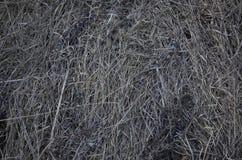 Februar-Gras Stockbild