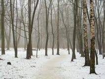 Februar-Waldung im Nebel und im Schnee Stockfoto