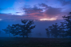 18, Februari 2017 Dalat--Mist over de Pijnboom Forest On Sunrise Background en beautyful clound in Dalat- Lamdong, Vietnam Royalty-vrije Stock Afbeeldingen