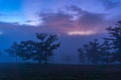 18, Februari 2017 Dalat--Mist over de Pijnboom Forest On Sunrise Background en beautyful wolk in Dalat- Lamdong, Vietnam Royalty-vrije Stock Foto