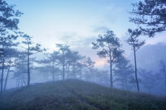 18, Februari 2017 Dalat--Mist over de Pijnboom Forest On Sunrise Background en beautyful wolk in Dalat- Lamdong, Vietnam Royalty-vrije Stock Foto's