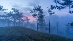 18, Februari 2017 Dalat--Mist over de Pijnboom Forest On Sunrise Background en beautyful wolk in Dalat- Lamdong, Vietnam Stock Foto