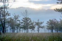 18, Februari 2017 Dalat--Mist over de Pijnboom Forest On Sunrise Background en beautyful wolk in Dalat- Lamdong, Vietnam Stock Afbeeldingen