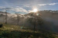 18, Februari 2017 Dalat--Mist over de Pijnboom Forest On Sunrise Background en beautyful wolk in Dalat- Lamdong, Vietnam Royalty-vrije Stock Afbeelding