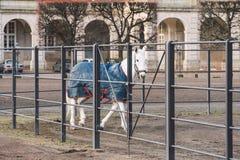Februari 20, 2019 denmark copenhagen Utbildande förbikopplingsanpassning av en häst i det kungliga stallet av slotten Christiansb royaltyfri bild