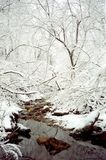 februari ensamhet arkivfoton