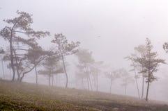18, Februari 2017 - Mist over pijnboom bosdalat- Lamdong, Vietnam Stock Afbeelding