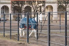February 20, 2019. Denmark. Copenhagen. Training bypass Adaptation of a horse in the royal stable of the castle Christiansborg. Slots. Man rider in uniform and royalty free stock image