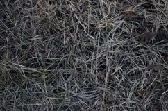 February frozen grass. Rozen grass in February after snow Royalty Free Stock Photos
