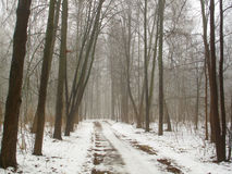 February grove in fog and road royalty free stock photos