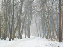 February grove in fog and snow Royalty Free Stock Photos