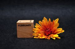 February on a wooden block with an orange daisy. On a black background stock photography