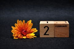 2 February on wooden blocks with an orange daisy. On a black background royalty free stock photos