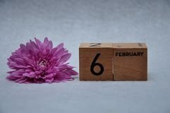 6 February on wooden blocks with a pink daisy. On a white background royalty free stock photo