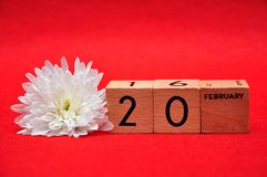 20 February on wooden blocks with a white daisy. On a red background stock photo
