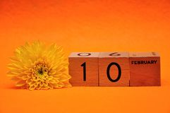 10 February on wooden blocks with a yellow daisy. On an orange background stock image