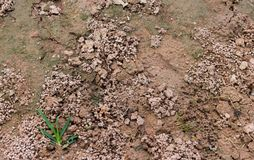 Feces of earthworms. Feces of earthworms on the wet sand ground Stock Photography