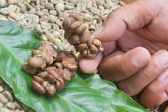 Feces with embedded coffee beans Stock Photos
