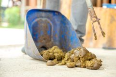 Feces horse is being swept away. Feces horse big is being swept away Royalty Free Stock Photo