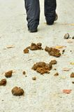 Feces on the road Stock Image