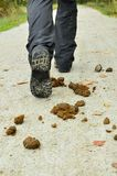 Feces on the road Stock Images