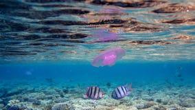 Fecha subacuática Imagen de archivo libre de regalías