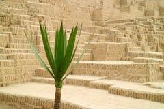 Fechado acima da planta verde com estrutura antiga obscura de Huaca Pucllana no fundo, Miraflores, Lima, Peru fotos de stock royalty free