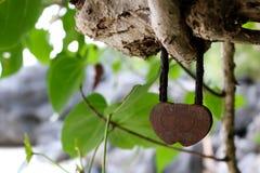 Fechamento chave da cerimônia do amor na árvore Foto de Stock Royalty Free