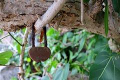 Fechamento chave da cerimônia do amor na árvore Fotografia de Stock Royalty Free