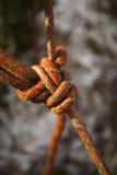 Fechamento da corda. O seguro de escalada. Fotos de Stock Royalty Free