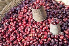 Fechas frescas del mercado, Nepal Foto de archivo libre de regalías