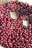 Fechas frescas del mercado, Nepal Foto de archivo