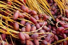 Fechas frescas en el mercado de Jericho Foto de archivo libre de regalías