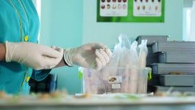 Feche acima, as mãos gloved do técnico de laboratório que estudam, examine sementes brotadas, enraizadas do milho, no laboratório filme