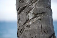 Feche acima da árvore Imagens de Stock Royalty Free